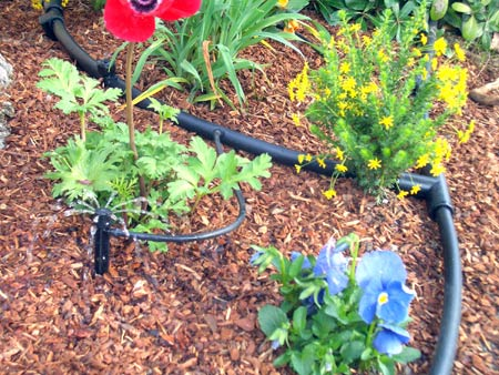 Drip Irrigation in Flower Beds
